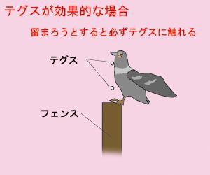 鳩よけ テグスが有効