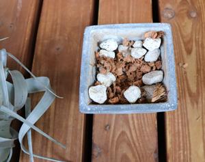 チランジア・キセログラフィカ 植え付け 鉢 用土