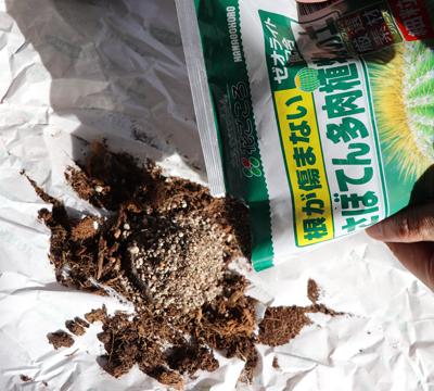 カンパニュラ・ブルーワンダー ベラボンとさぼてんの土を混ぜる