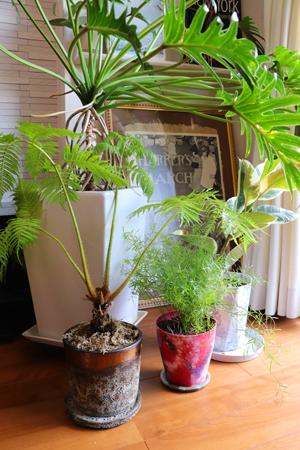植木鉢 ペインティング 風景