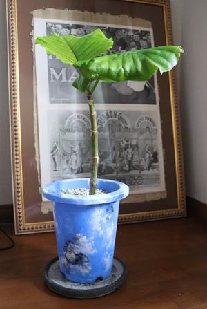 プラスチック 植木鉢 ペイント リメイク ブルー