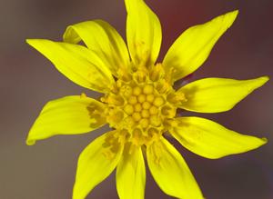 ルビーネックレス 花
